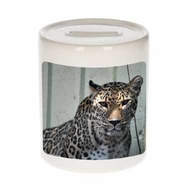 Kinder dieren foto spaarpot gevlekte jaguar jaguars spaarpotten jongens meisjes